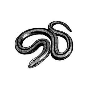 bij 'Alsnog de hazelworm
