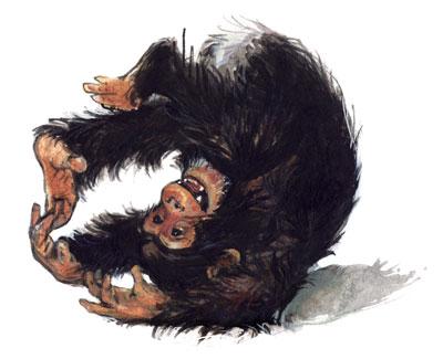 INTRO_chimpansee_IreneGoede